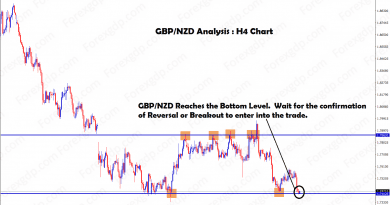 GBP NZD forex trading strategy for buying at the support level