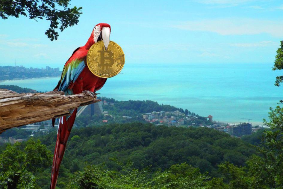 bitcoin flies to the high with parrot bird
