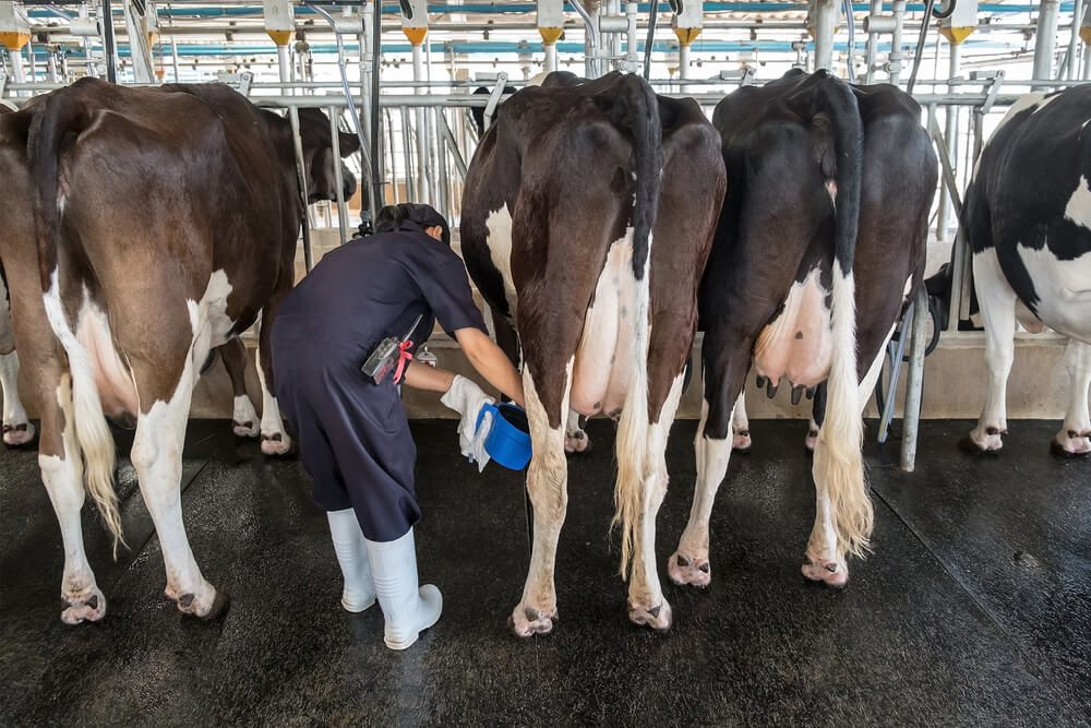Dairy products remain robust growth for the GDP of New Zealand